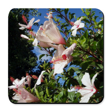 Hibiscus Flowers Cork Bottom Coaster :  floral drinks coaster drink mat feminine