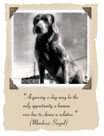 "This majestic old hound dog illustrates the Mordecai Siegal quote: ""Aquiring a dog may be the only opportunity a human ever has to choose a relative."""