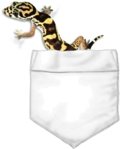 A banded gecko peaks out of your pocket. This colorful reptile will keep you company all day. Don't worry, he'll stay right where he is.