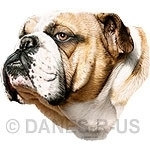 Charming Bulldog bust, head study artwork from Danes-R-Us.