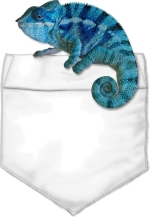 A blue Panther Chameleon sits on your t-shirt pocket. A perfect shirt for those that work with children.