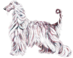 Pure Elegance describes the Afghan Hound in all aspects - Elegant Afghan artwork from Danes-R-Us.