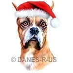 Christmas with Boxers - Santa Boxer is ready to celebrate the holidays wearing a santa hat.