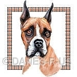 Flashy Fawn & White Boxer with a plaid border.