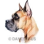 Cropped fawn Boxer is from my original colored pencil drawing, digitally enhanced for optimum color and printing.