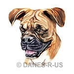 Uncropped fawn Boxer is from my original colored pencil drawing. Such a love with her fly-away ears!