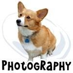 Pembroke Welsh Corgi Photography