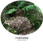 Maitake (Grifola frondosa) mushroom