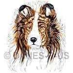 Sheltie Bust / Head Study. Taken from my original colored pencil drawing of a Sable Shetland sheepdog and digitally enhanced for optimum color and print output.