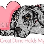 A Great Dane Holds My Heart - features Great Danes in the colors of Black, Blue, Brindle, Fawn, Harlequin, Mantle, Merle, Mantled Merle & White, with Cropped or Uncropped ears holding a pink heart.