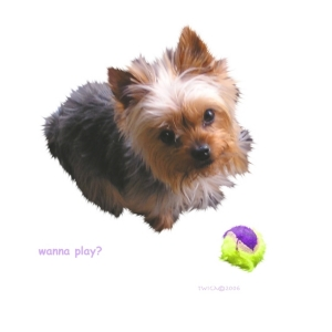Adorable Yorkie wants to play....pleeeeeeez???  Great gifts for Yorkshire Terrier lovers, t-shirts, mousepads, cuttingboards and bags.  Choose one for yourself or an animal lover you know.