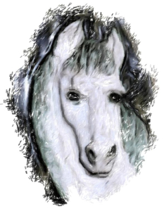 A gentle white horse with a dreamy look...  maybe she is the horse of your dreams.  A  beautiful imge to keep or give as a gift on t-shirts,bags,mousepads and housewares.