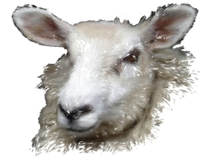 Beautiful soft fluffy white sheep.  Give or keep this barnyard animal on t-shirts,bags,mousepads and housewares.  Great whether you are feeling sheepish or not!