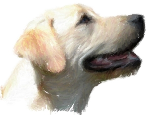Yellow Labrador Retrievers!  For all lab lovers and all dog lovers, this happy doggie will smile his way into your heart.  See him on t-shirts,bags,hoodies,mousepads and housewares.  A great gift!