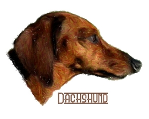 Who can resist an adorable wiggly little wiener dog?For all Dachshund lovers, dog lovers and animal lovers! Our t-shirts,bags,mousepads,housewares all make great gifts!