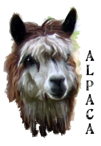 The beautiful Alpaca, at home high in the Andes Mountains of Peru and Bolivia. A treasured gift for all animal lovers. T-shirts,mousepads,hoodies,bags,housewares.