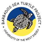 The official logo of the Barbados Sea Turtle Project