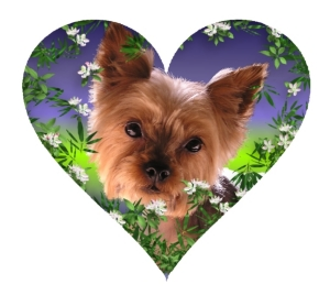 Yorkie Love just makes your heart melt.  Great gifts for dog lovers and animal lovers and specially for you, if you have the love of a Yorkshire Terrier or just wish you did.  T-shirts, mousepads, household gifts.