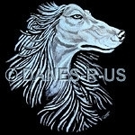 Elegant Afghan Hound in Shades of Blue on Black, Afghan Oasis is taken from my original acrylic painting. Dog artwork from Danes-R-Us, ©danesrus, danesrus.com
