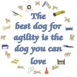 Agility is a game you play with your dog. Agility is part time, living with your dog is full time.  So the place to start is with a dog you can love. The best dog for YOU for agility is the dog you can love.