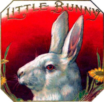 Little Bunny cigar label artwork.