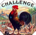 Challenge Rooster cigar label artwork.