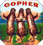 Gopher cigar label artwork.