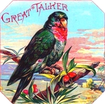 Great Talker Parrot cigar label artwork.