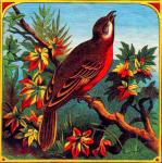 Bird Cigar Label