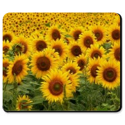 Check out our personalized mousepad filled with sunflowers! Custom mouse pads are great presents for birthdays and holiday gift giving! Visit my website at WWW.BONFIREDESIGNS.COM for more great gift ideas!