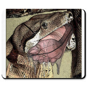 Enjoy this snake vore mouse pad as our friend takes it's final bite! Hot!  Google VOREVILLE