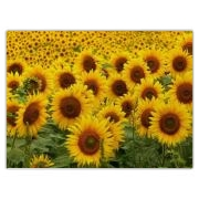 Sunflower and Nature Theme Kitchen Presents For Holidays