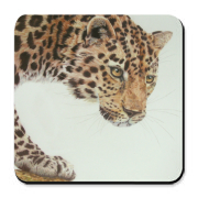 The leopard is the most powerful feline in the world next to the jaguar. Wildlife artist Kathie Miller as captured this young leopard with loving detail in colored pencil.