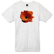 Bright orange petals cup the flowers black and pumpkin colored center.  The texture and detail of the flower is captured close up with a macro lens.